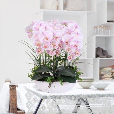 100 seeds Phalaenopsis suite living room interior decoration  flowers potted