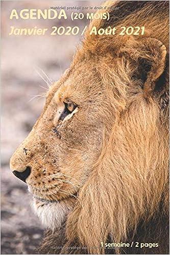 AGENDA (20 mois)   Janvier 2020 / Août 2021: lion animaux sauvages