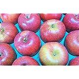 長野県産 生産農家直送りんご 「あいかの香り」自家用ランク 10~20玉 約5kg入り/箱