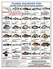 AVAILABLE NOW! New FWC spotted seatrout size limits, bag limits, and seasons have been announced for February 1, 2020! ................ The Florida Fish Identification Card Set by Tackle Box I.D. is a set of three cards designed to help fishe...