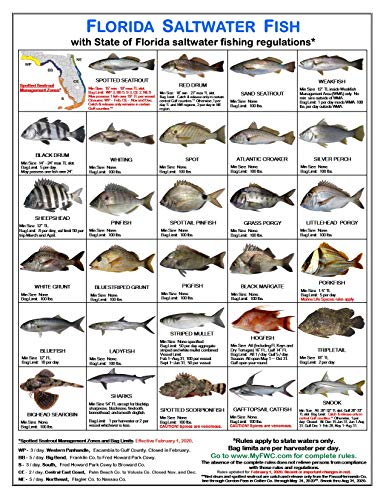 Tackle Box I.D. Florida Saltwater Fish Identification Card Set - Three Cards, 59 Common Fish - 17 Common Sharks - New Feb 1, 2020 Spotted Seatrout Rules and Zones