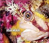 Ocean Wildlife, Carole G. Vogel, 0531166813