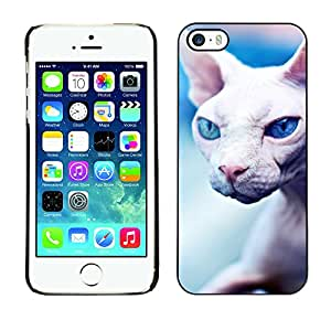 Paccase / SLIM PC / Aliminium Casa Carcasa Funda Case Cover - Peterbald Sphynx Donskoy Hairless Cat - Apple Iphone 5 / 5S