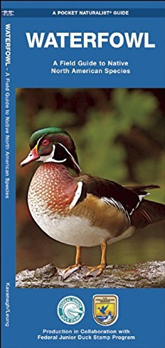 Waterfowl: A Field Guide to Native North American Species (Pocket Naturalist Guide Series) by James Kavanagh - Waterford The Mall