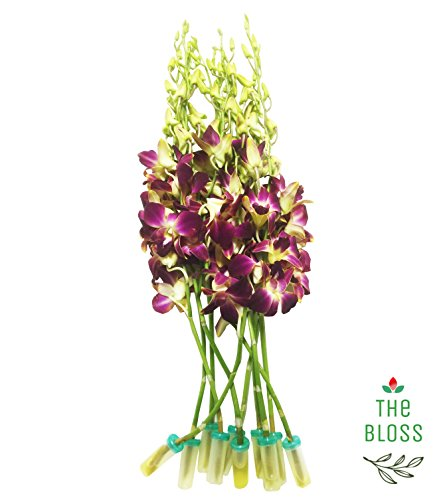 The Bloss - 10 Stems Bouquet Fresh Yellow Red Dendrobium Orchids Flowers from Tropical Beauties