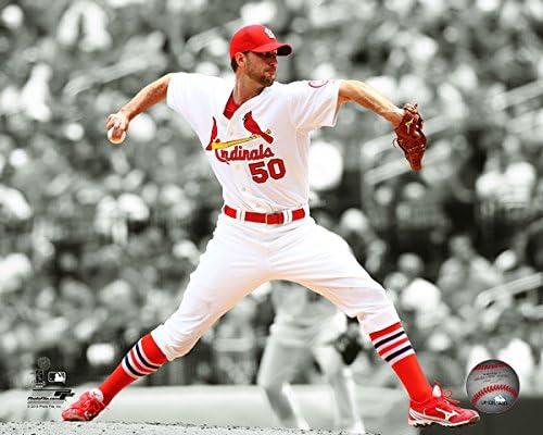 MLB Adam Wainwright St Size: 8 x 10 Louis Cardinals 2015 Spotlight Photo