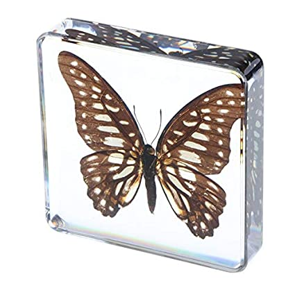 Real Insect Specimen Wasp in Clear Paperweight 7.5 x 4 x 2.5 cm