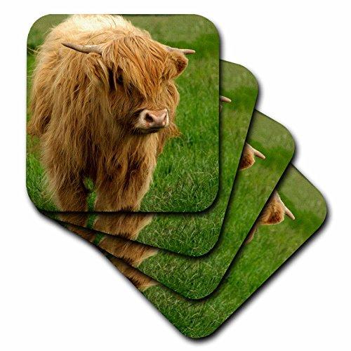 3dRose Scotland, Highland cow, farm animal - EU36 CMI0128 - Cindy Miller Hopkins - Ceramic Tile Coasters, set of 4 (cst_82799_3) by 3dRose