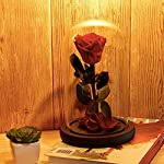 Moonee-Beauty-and-The-Beast-RoseEnchanted-Red-Rose-and-Glass-Dome-Enchanted-Rose-Beauty-and-The-Beast-Best-Gift-for-Valentines-Day-Real-Rose