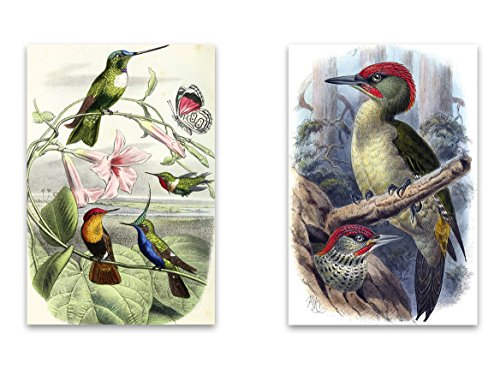 """Vintage Fridge Birds Natural Curiousities Magnet Set - 2""""x3"""" Magnets featuring Hummingbirds & Woodpeckers for Kitchen Art, Office Decor, Bird lover Gift for Adults, Kids, Men & Women - Made in USA"""