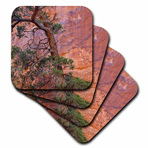 3dRose Danita Delimont - Trees - Utah, Arches NP. Pinyon Pine in front of red rock canyon wall - set of 4 Coasters - Soft - Christmas Pinyon Tree