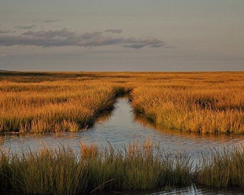 Great Bay Salt Marsh Photograph - Coastal Wall Art -