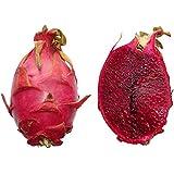 Pitahaya Rote Drachenfrucht 20 Samen *Rotfleischig* -Selten-