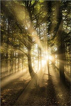 Posterlounge Hartschaumbild 100 x 150 cm Bilder, Poster, Kunstdrucke & Skulpturen Möbel & Wohnaccessoires Sonnenstrahlen im herbstlichen Wald von Lee Frost