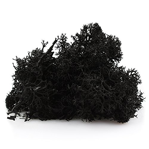 NW Wholesaler Preserved Reindeer Moss for Terrariums, Fairy Gardens, Arts & Crafts - 9 Colors to Choose from (Black)