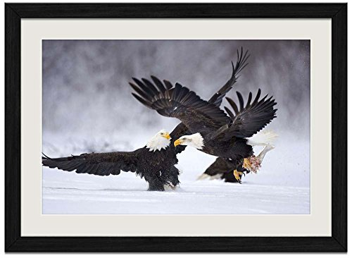 Two Bald Eagles - 1