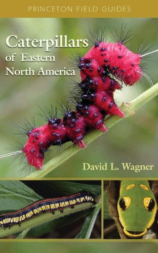 caterpillars-of-eastern-north-america-a-guide-to-identification-and-natural-history-princeton-field-