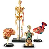 Learning Resources Anatomy Models Bundle Set