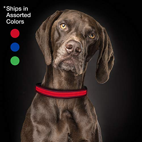 Life Gear USB Rechargeable LED Pet Collar In Assorted Colors, Large Size ()