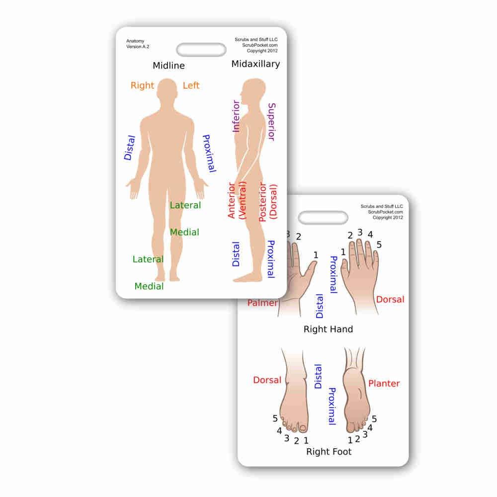Anatomie Anatomische An Vertikale Badge Id Card Pocket Reference