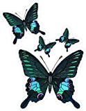 4 Blue & Black Butterflies - Etched Vinyl Stained Glass Film, Static Cling Window Decal