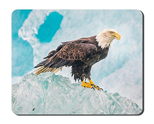 Hawk Bird Sitting On Rock Animal Picture Game Office Mouse Pad (Hawks Rock Animal)