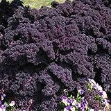 Park Seed Redbor Hybrid Kale Seeds