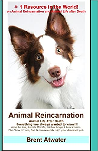 Animal Reincarnation: Everything You Always Wanted to Know