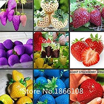 Home Garden Hot Selling 100pcs Bag Blue Strawberry Rare Fruit Vegetable Seed Bonsai Plant Home Garden Free Shipping