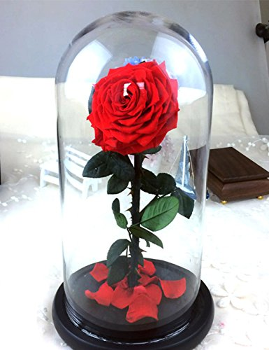 Handmade Preserved Rose Never Withered Roses Flower in Glass Dome, Gift for Valentine's Day Anniversary Birthday (Red)