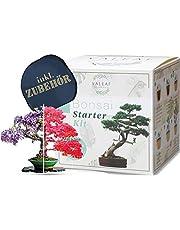 valeaf Bonsai Starter Kit - Summer Sale - kweek je eigen bonsai boom - kweekset incl. 4 soorten bonsai zaden & accessoires - voor beginners - het ideale geschenk voor boomplanten