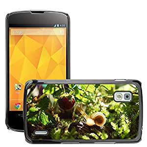 Super Stella Slim PC Hard Case Cover Skin Armor Shell Protection // M00148885 Snail Animal Nature Shell Mollusk // LG Nexus 4 E960