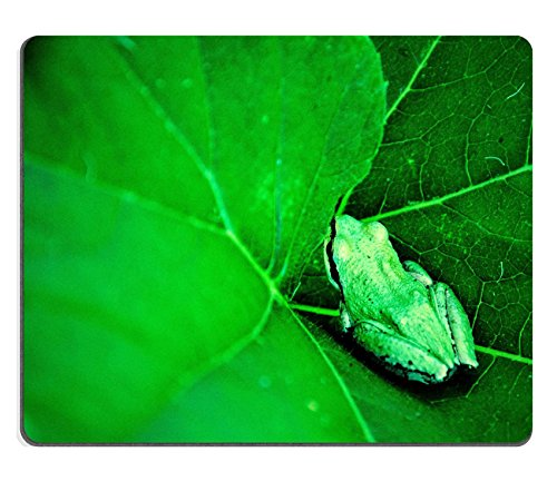 Aquatic Amphibians (frog lily leaves water aquatic plant amphibian anima fauna floating vegetation QZone Customized Made to Order Cloth with Neoprene Rubber Mouse Pads)
