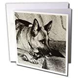 3dRose German Shepherd - Greeting Cards, 6 x 6 inches, set of 6 (gc_4622_1)