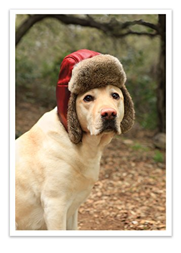 (12 'Dog with Fur Cap' Christmas Cards with Envelopes, Dog in Hat Greeting Cards, Puppy with Red Hunting Hat Holiday Note Cards, Yellow Lab with Red Hat Cards - Palm)