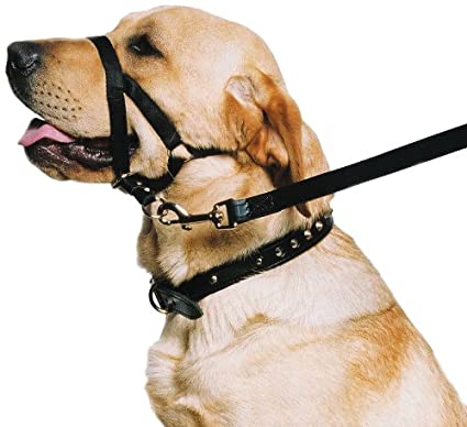 Amazon.com : Ancol - Dog Training Halter - Head Collar - Helps Stop