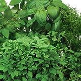 AeroGarden Gourmet Herb Seed Pod Kit (7-Pod)