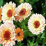 Outsidepride Calendula Pink Surprise - 1000 Seeds