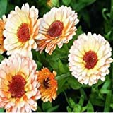 Outsidepride Calendula Officinalis Pink Surprise Flower Seed - 1000 Seeds