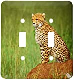 3dRose lsp_83911_2 Cheetah on the Look Out, Tanzania Africa NA02 DNO0340 David Northcott Double Toggle Switch