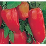 Exotic Plants Tomate San Marzano 3 - red tomato - 50 seeds