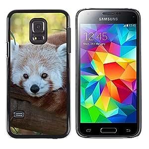 Be Good Phone Accessory // Dura Cáscara cubierta Protectora Caso Carcasa Funda de Protección para Samsung Galaxy S5 Mini, SM-G800, NOT S5 REGULAR! // Little Red Panda Bear Face Tree