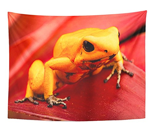 Emvency Tapestry Poison Dart Frog Phyllobates Terribilis Deadly Animal From the Tropical Amazon Home Decor Wall Hanging 60
