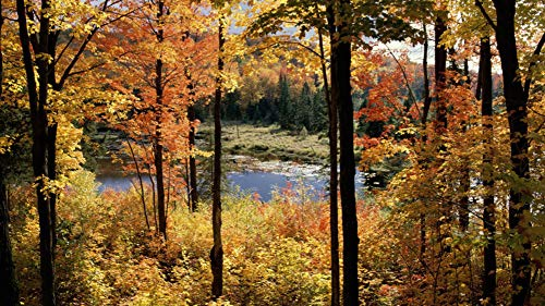 Puzzle DIY Art Lake Fortune Gatineau Park Jigsaws 1000 Pieces for Grown Ups Adults ()