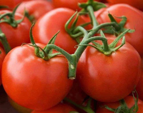 Arkansas Traveler Heirloom Tomato Seeds- 50+ Seeds for 2019