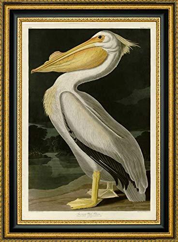 American White Pelican by John James Audubon - 27.25