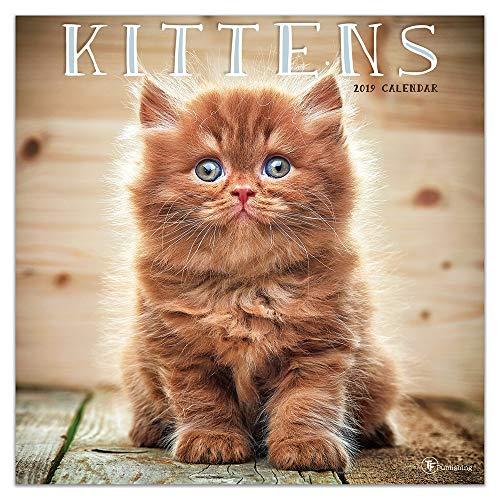 Kittens Wall Calendar - 2019 Kittens Wall Calendar