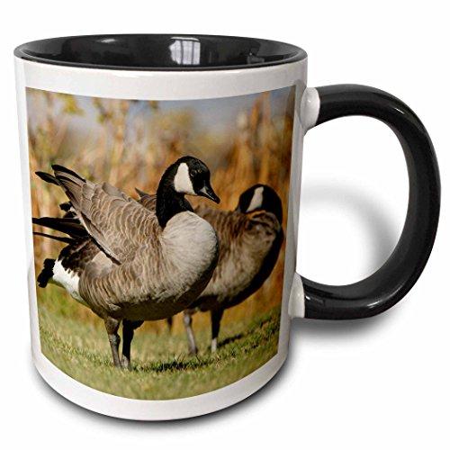 3dRose 97560_4 Canadian Geese, Birds, Elk Refuge, Wyoming-Us51 Rnu0013-Rolf Nussbaum Ceramic Mug, 11oz, Black/White (Nussbaum Outlets)