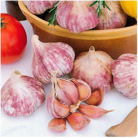 Seeds House- Caiuet 100 Pieces French Garlic Seeds Organic Vegetable Colorful Garlic Plant Garlic Rich Nutritious Healthy Garlic Seed Flower Seeds