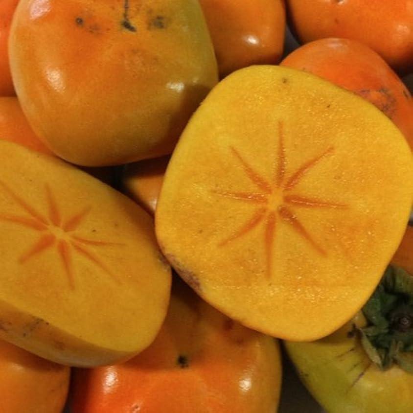 議論する伝染病キャスト和歌山県産 たねなし柿 L~2L 7.5キロ (32個~40個)